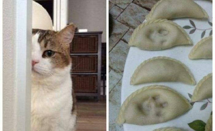 Странные котики, с которыми никогда не соскучишься, 50 фото