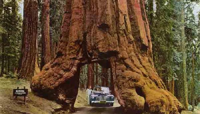 Самые интересные и необычные деревья на Земле: 30 фото