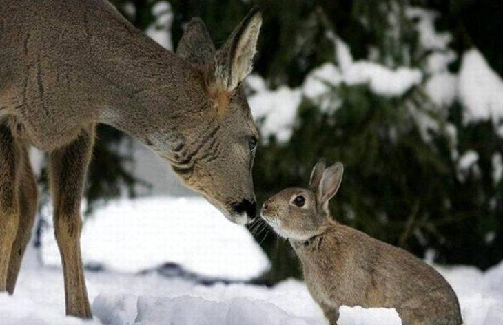 Картинки лось заяц
