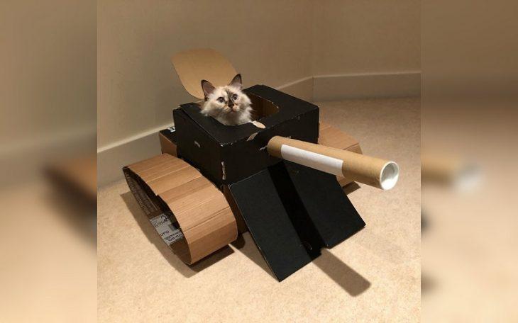 cat tankist