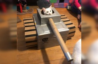 cat tankist