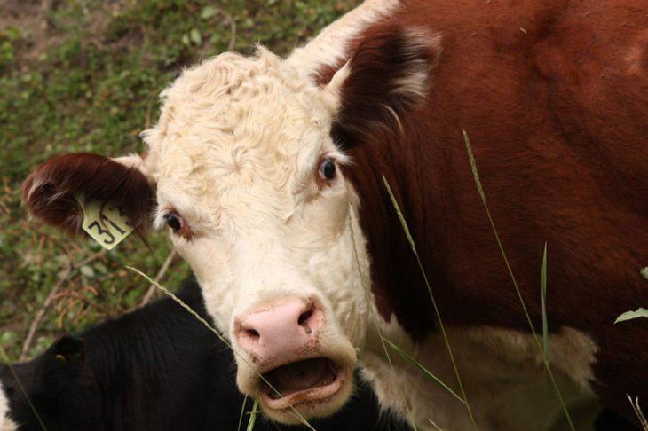 Таких удивленных мордочек вы еще не видели: 40 смешных снимков животных