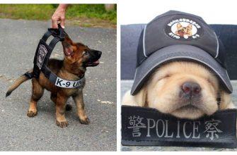 полицейские щенки