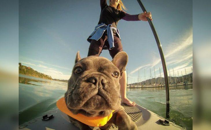 funny animal selfies