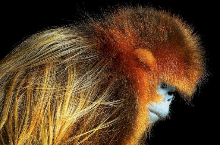 Концептуальный взгляд на животных: 33 портрета
