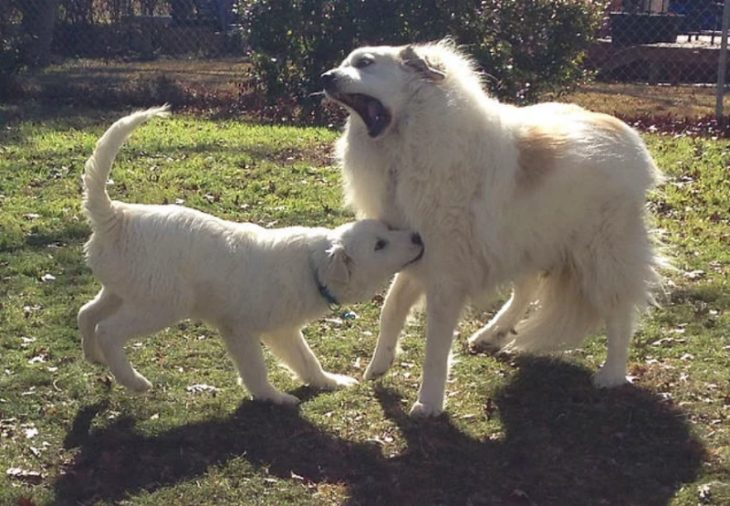 Собаки которые «очень счастливы» появлению в доме нового щенка: 30 фото