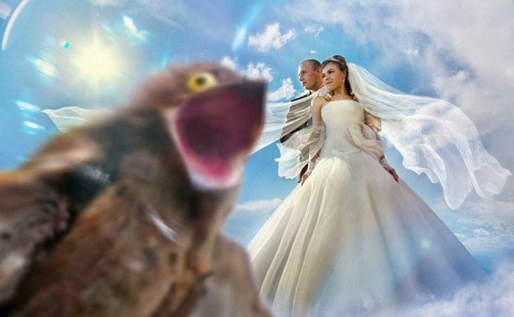 50 самых безумных и смешных свадебных фотографий